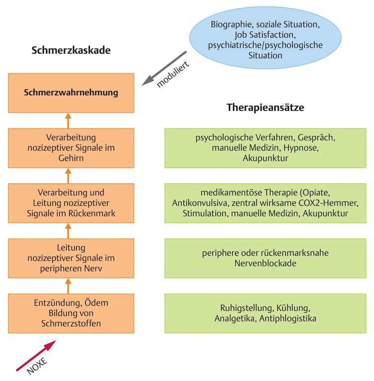 Großzügig Oberflächenanatomie Des Bauches Ideen - Anatomie Von ...