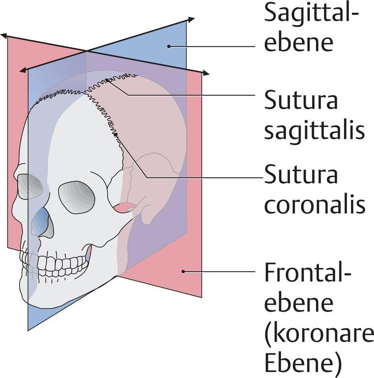 Großartig Anatomie Einer Ebene Ideen - Anatomie Von Menschlichen ...