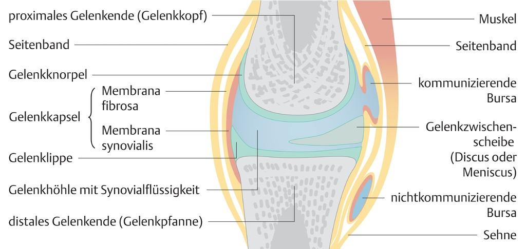 Groß äußeren Nase Anatomie Diagramm Ideen - Anatomie und Physiologie ...