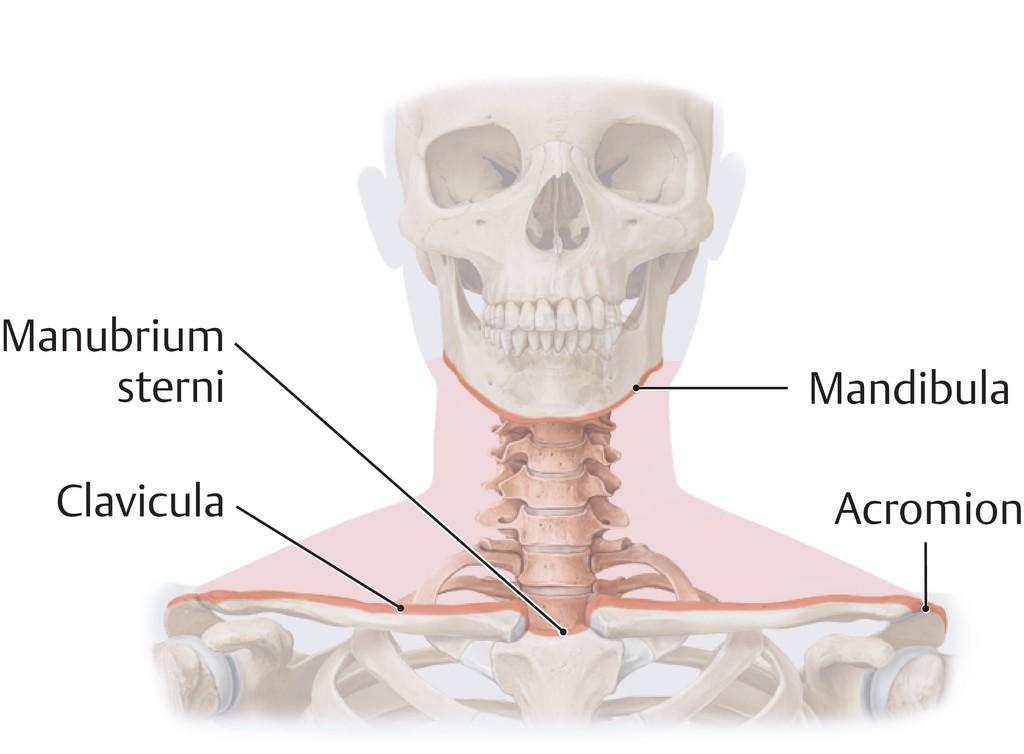 Ungewöhnlich äußeren Weiblichen Fortpflanzungssystem Anatomie Bilder ...
