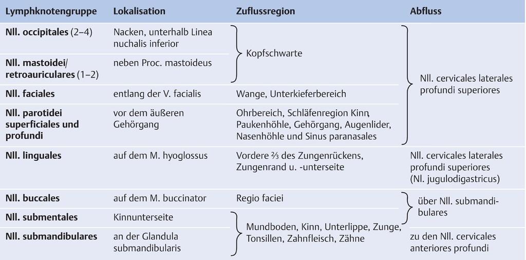 Atemberaubend Lungen Fissur Oberflächenanatomie Ideen - Menschliche ...