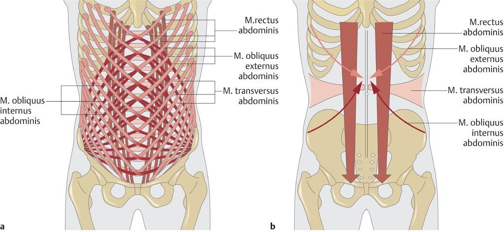 Großartig Unter Armmuskeln Galerie - Menschliche Anatomie Bilder ...