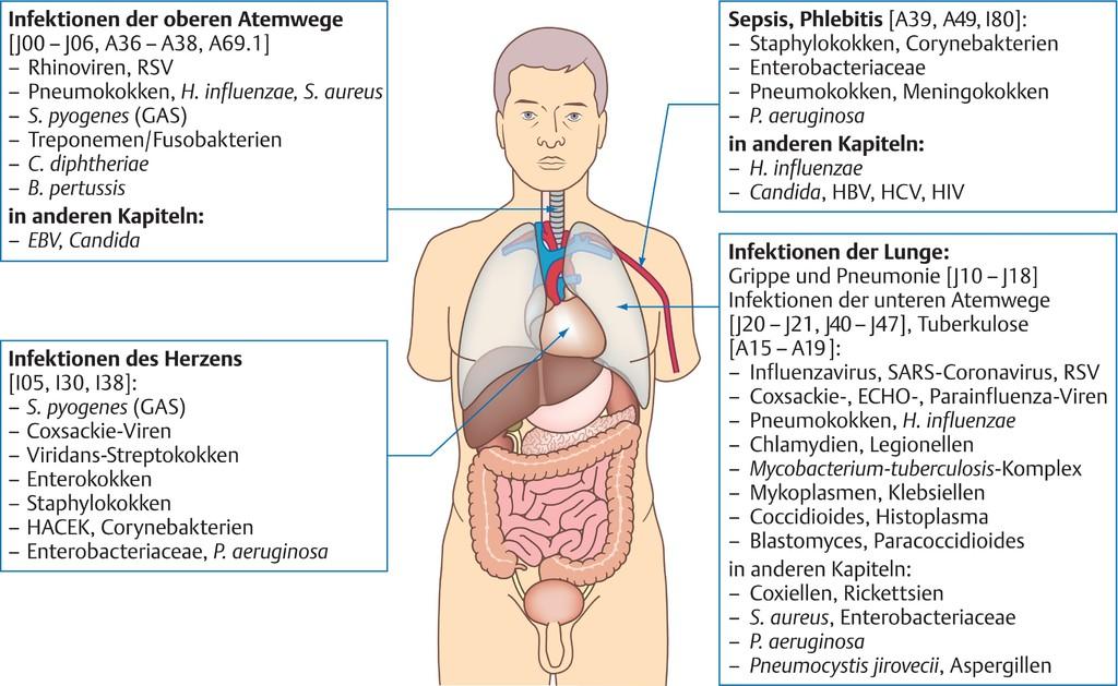 Fantastisch Anatomie Des Oberen Atemwege Bilder - Anatomie Von ...