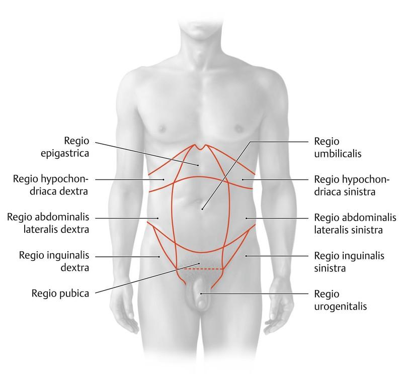 Beste Innere Organ Lage Zeitgenössisch - Menschliche Anatomie Bilder ...