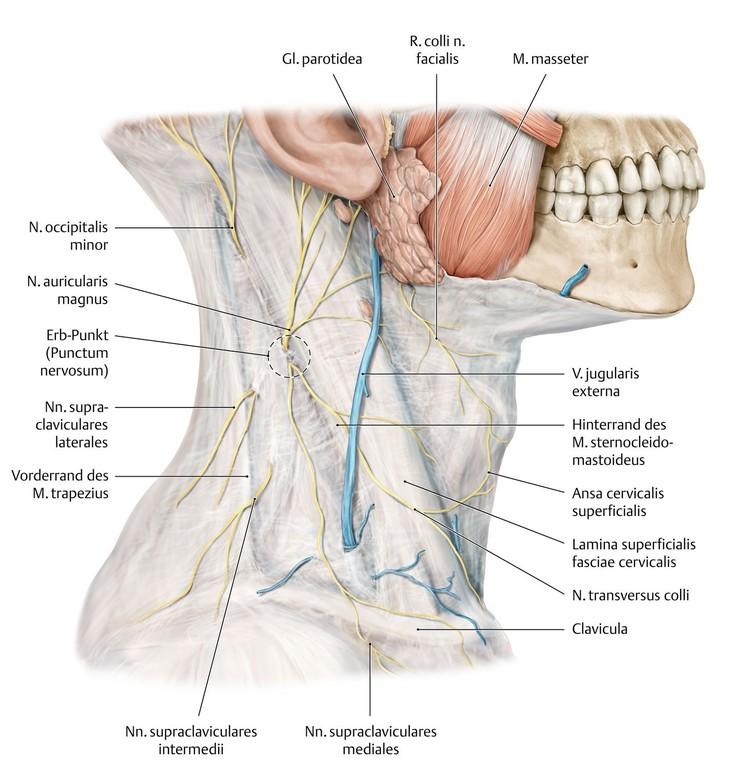Großartig Ct Anatomie Kopf Und Hals Ideen - Anatomie Ideen - finotti ...