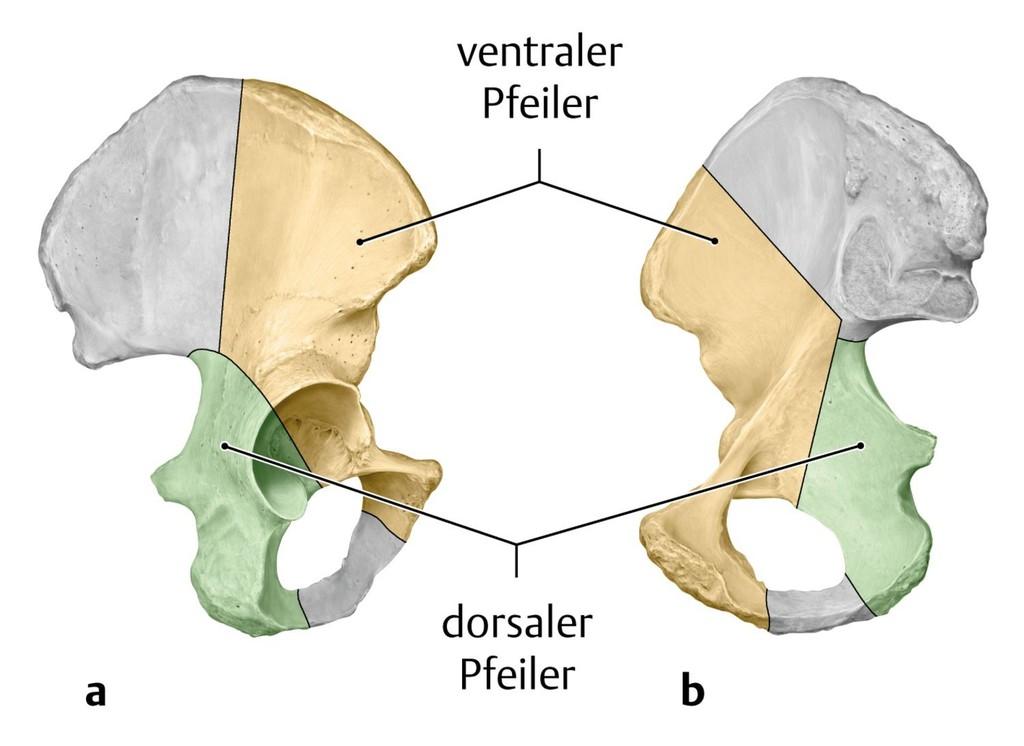 Ungewöhnlich Menschliche Beckenanatomie Galerie - Anatomie Ideen ...