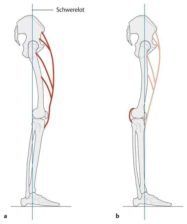 Prometheus Allgemeine Anatomie Und Bewegungssystem Pdf