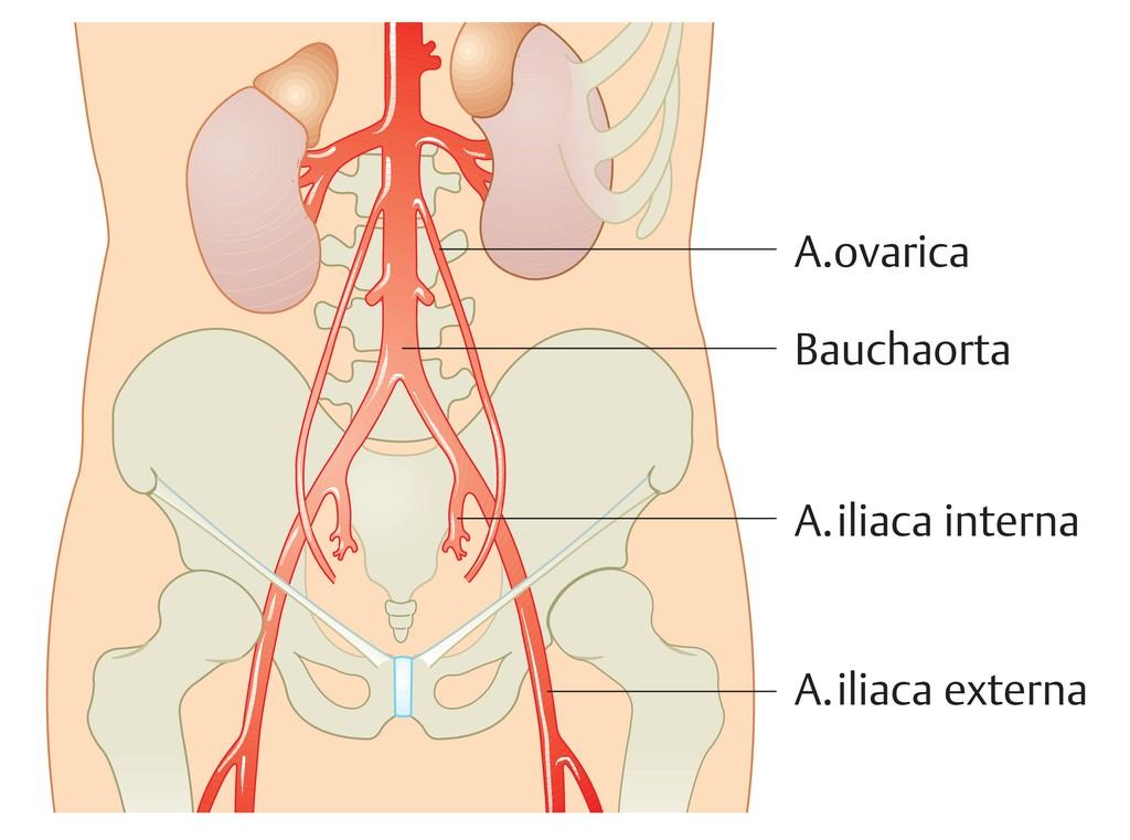 Ungewöhnlich Humanbiologie Und Anatomie Bilder - Anatomie Ideen ...
