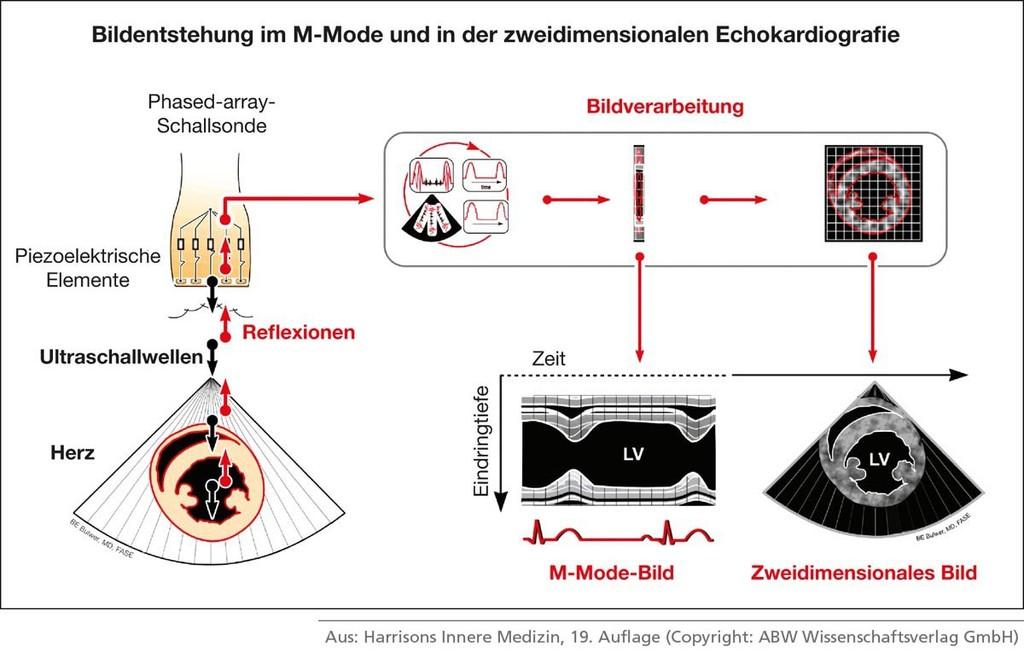 Niedlich Clam Innere Anatomie Diagramm Fotos - Anatomie Ideen ...