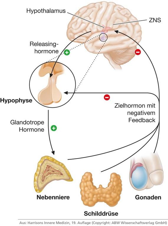 Glandotropes Hormon    Med-koM
