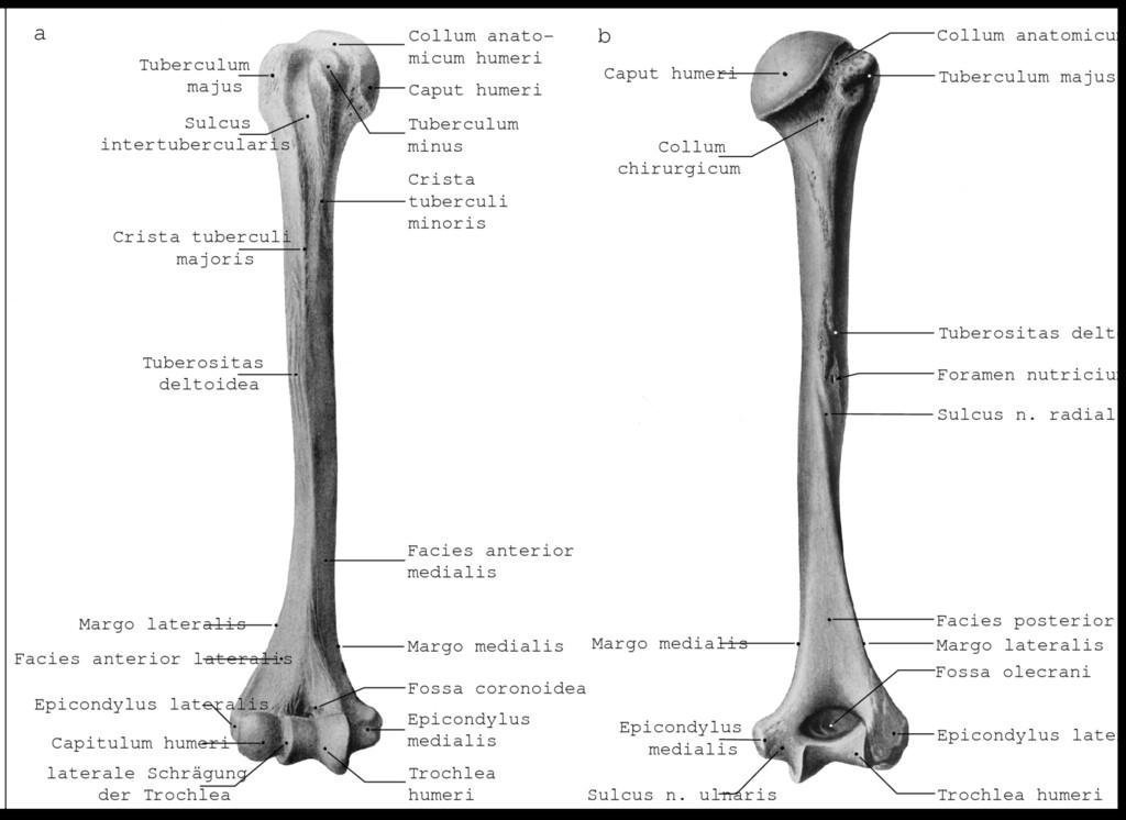 Wunderbar Unterarmknochen Fotos - Anatomie Ideen - finotti.info