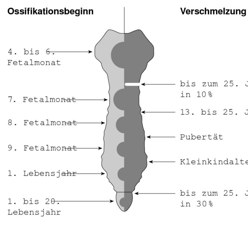 Ziemlich Rippen Und Brustbein Anatomie Ideen - Anatomie Ideen ...