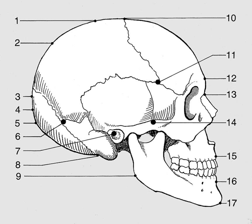 Nett Felsenbeins Anatomie Bilder - Anatomie Ideen - finotti.info