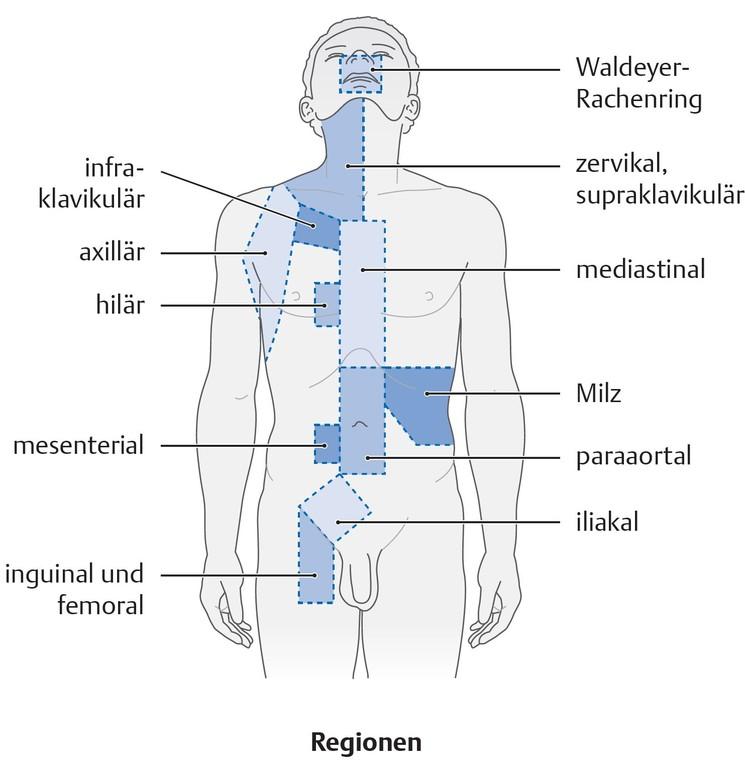 Nett Hepatische Arterielle Anatomie Bilder - Anatomie Ideen ...