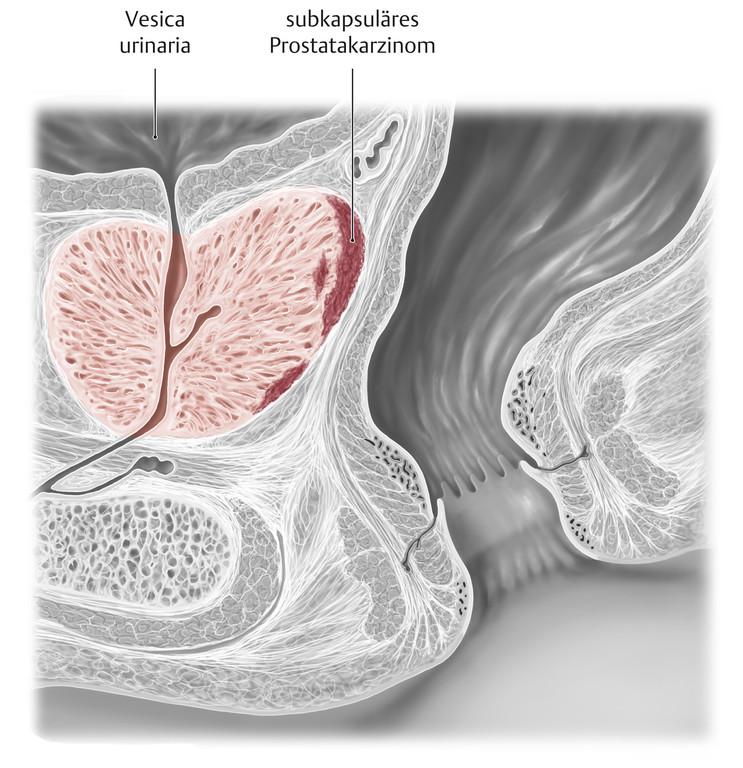 Gemütlich Anatomie Beckenbereich Ideen - Anatomie Ideen - finotti.info