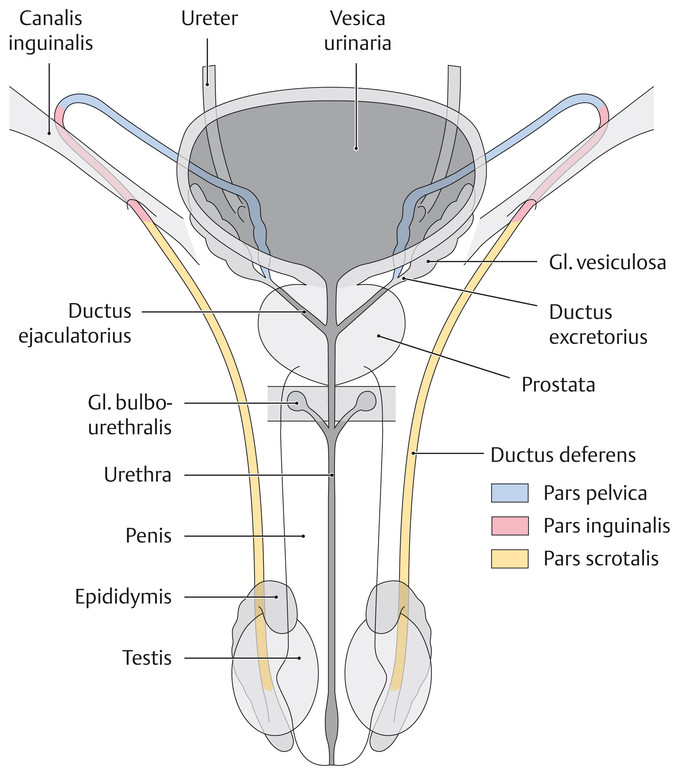 old woman vagina