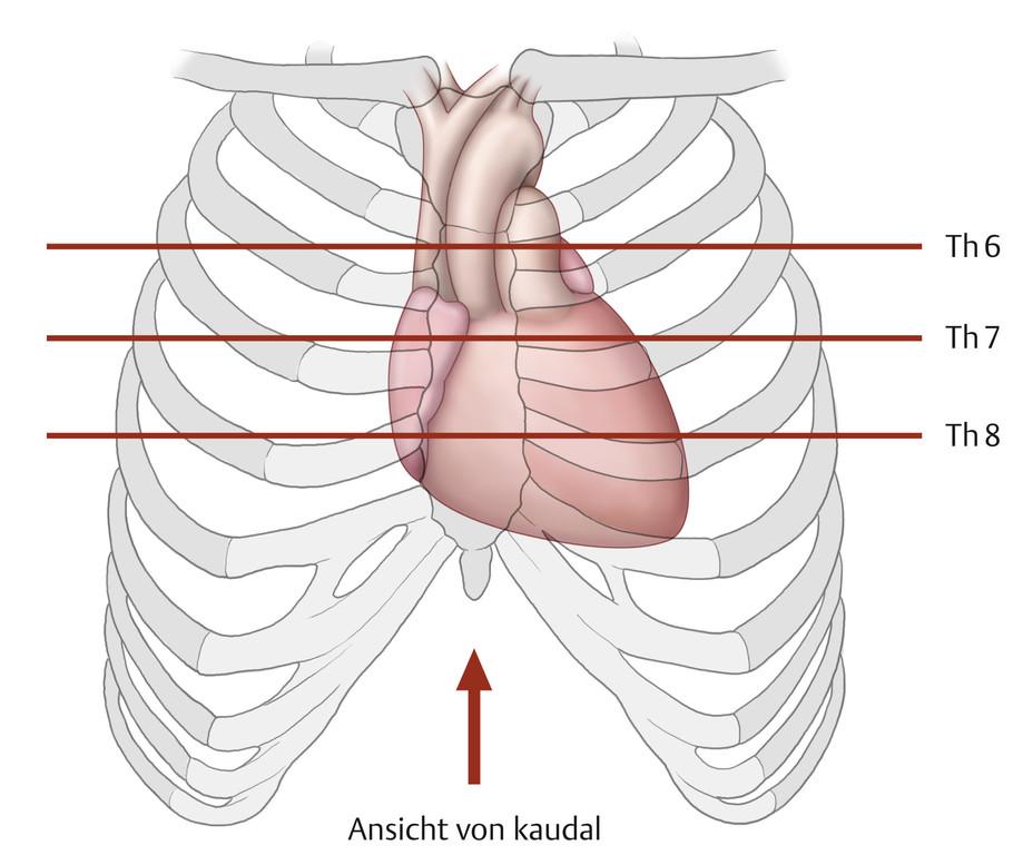 Nett Lungengefäße Anatomie Ideen - Anatomie Ideen - finotti.info