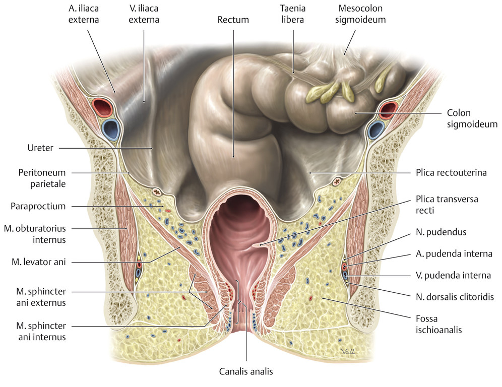 anatomie analkanal rasierte haare frauen