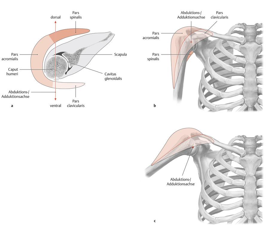 Ausgezeichnet Nasenanatomie Turbinates Ideen - Anatomie Ideen ...