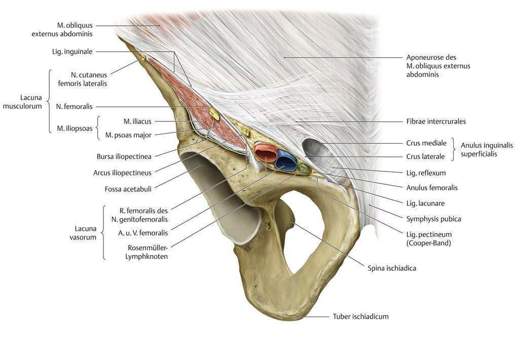 Lacuna vasorum (Gefäßpforte) || Med-koM