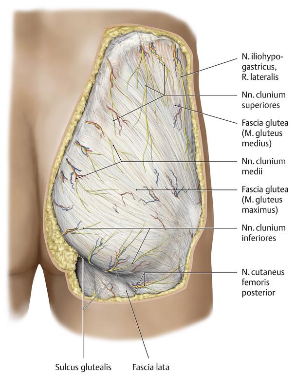 Sulcus glutealis (Gesäßfruche) || Med-koM