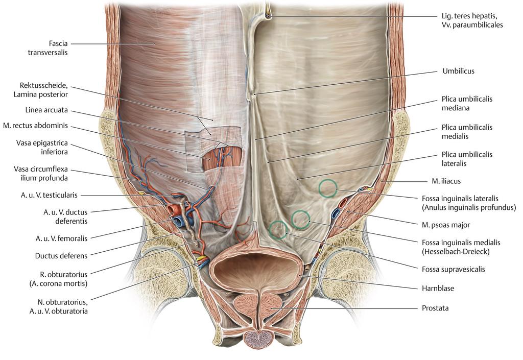 Charmant Anatomie Der Vorderen Bauchwand Fotos - Anatomie Ideen ...