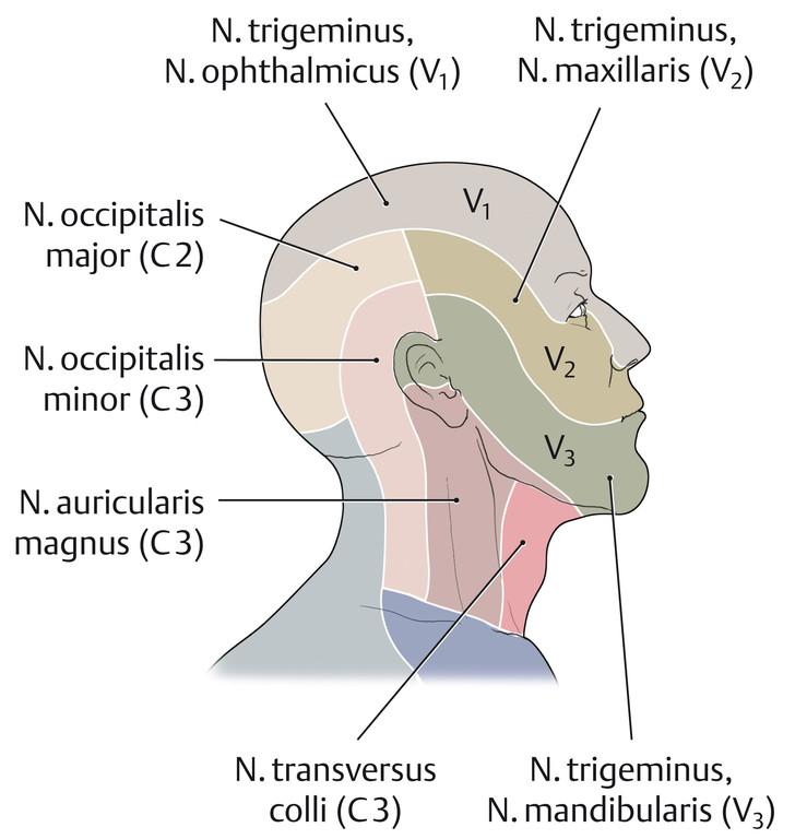 Wunderbar Dermatomen Des Kopfes Galerie - Anatomie Von Menschlichen ...