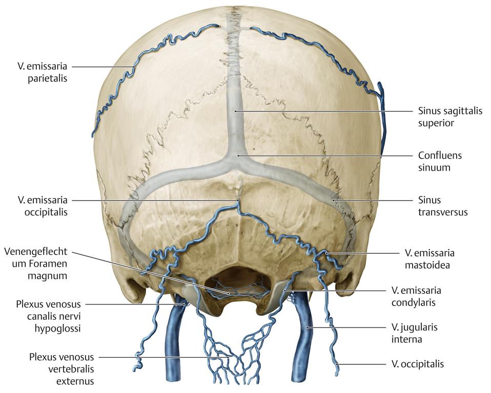Wunderbar Nerven Im Kopf Und Hals Galerie - Anatomie Ideen - finotti ...
