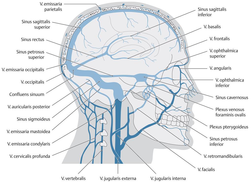 Atrial fibrillation (A-fib, AF) - causes, symptoms, treatment ...