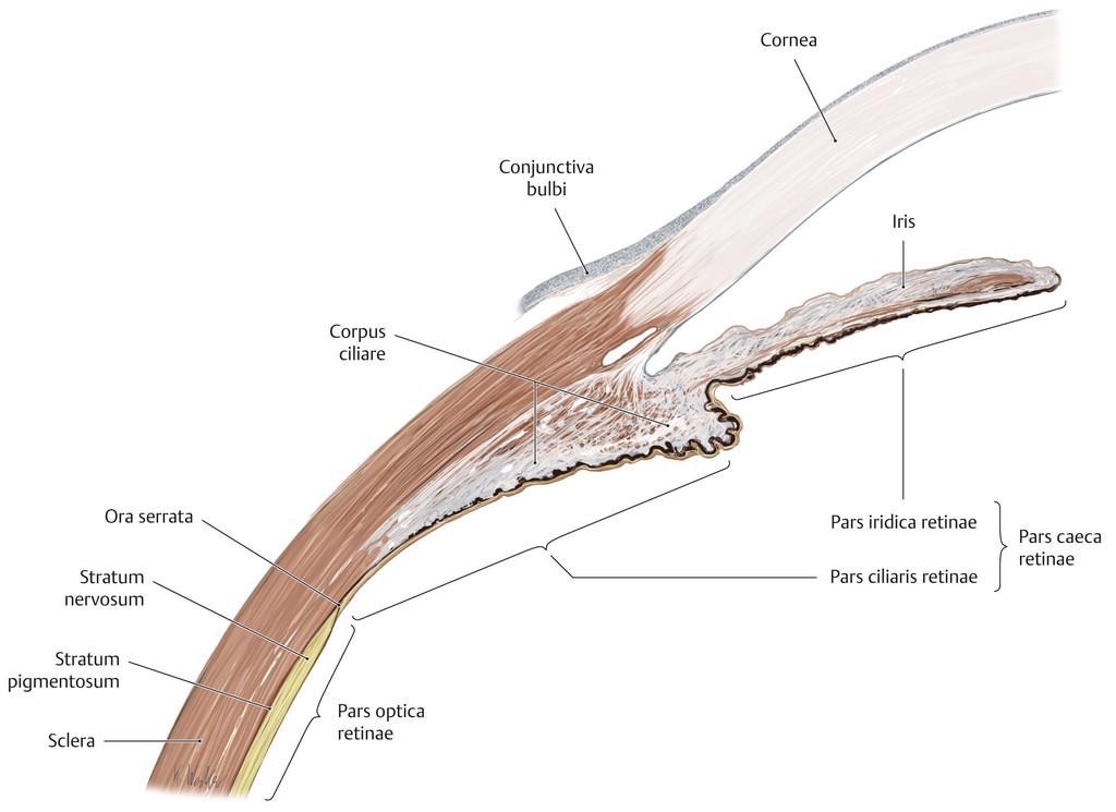 Charmant Oberflächenanatomie Der Knie Fotos - Anatomie Ideen ...