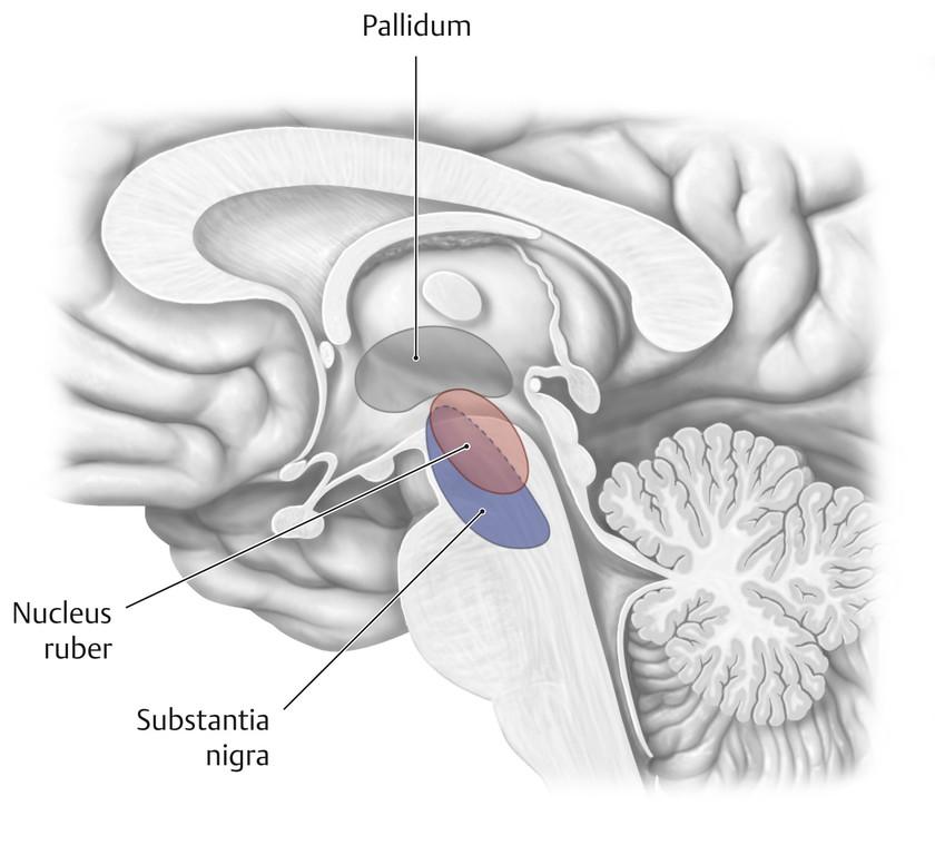 Großzügig Nasenseptums Anatomie Ideen - Menschliche Anatomie Bilder ...