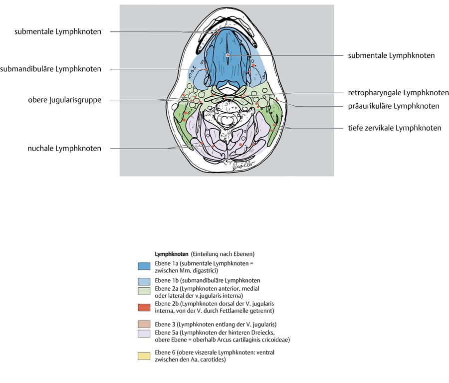 Fantastisch Anatomie Eines Lymphknotens Bilder - Anatomie Ideen ...