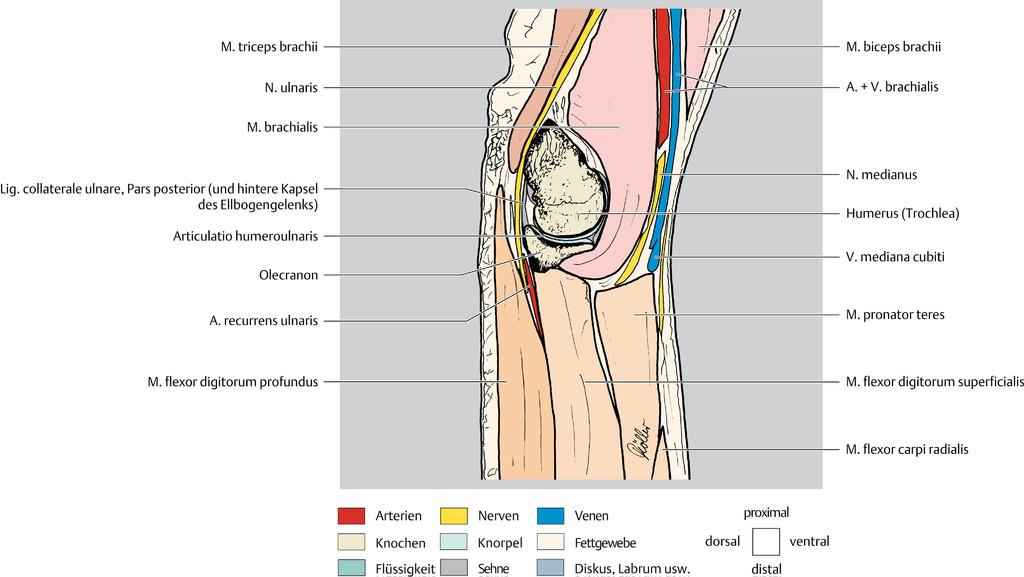 Erfreut Studienführer Für Anatomie Und Physiologie 1 Bilder ...