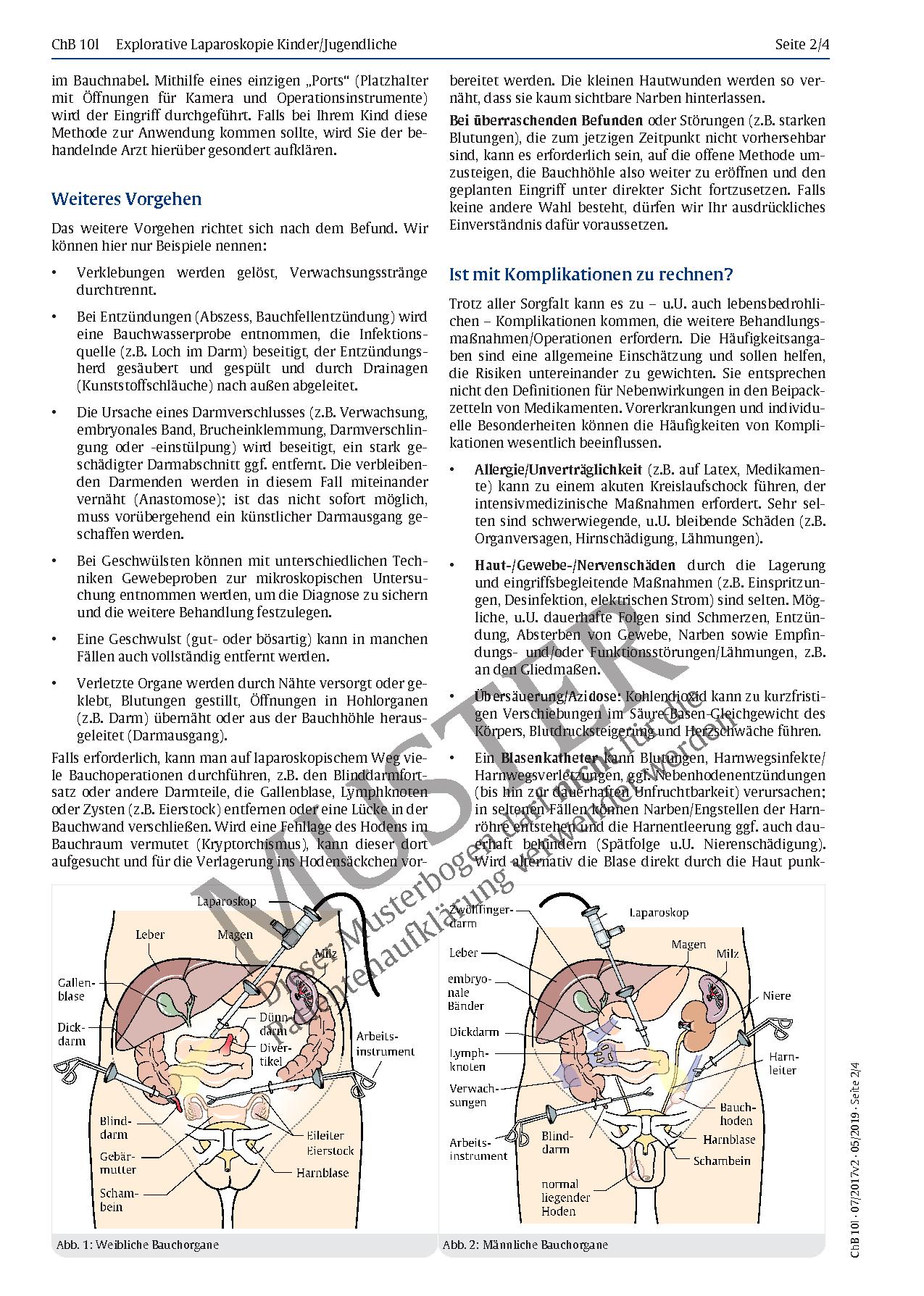 Großartig Bauch Anatomie Bild Bilder - Physiologie Von Menschlichen ...