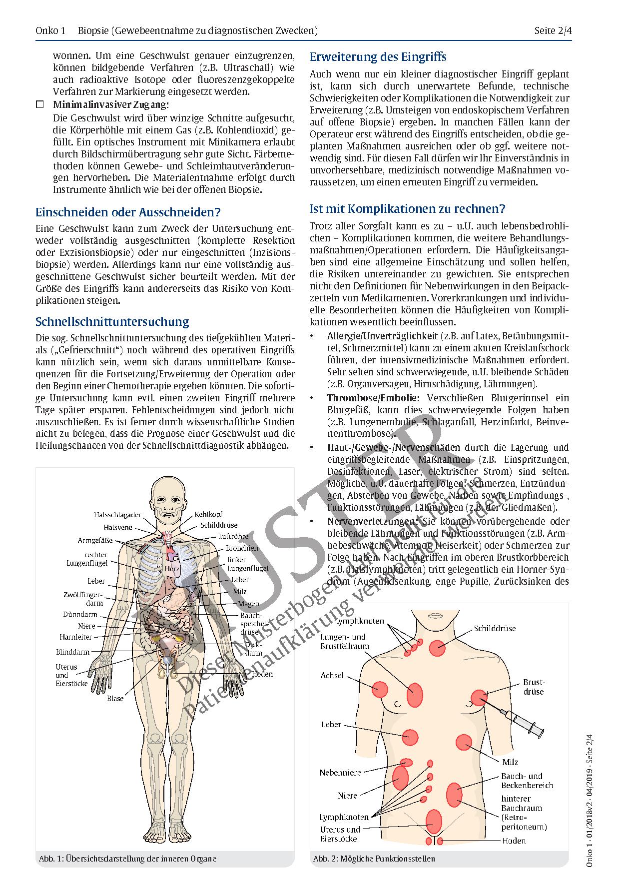 Berühmt Bild Ihrer Inneren Organe Zeitgenössisch - Anatomie Von ...
